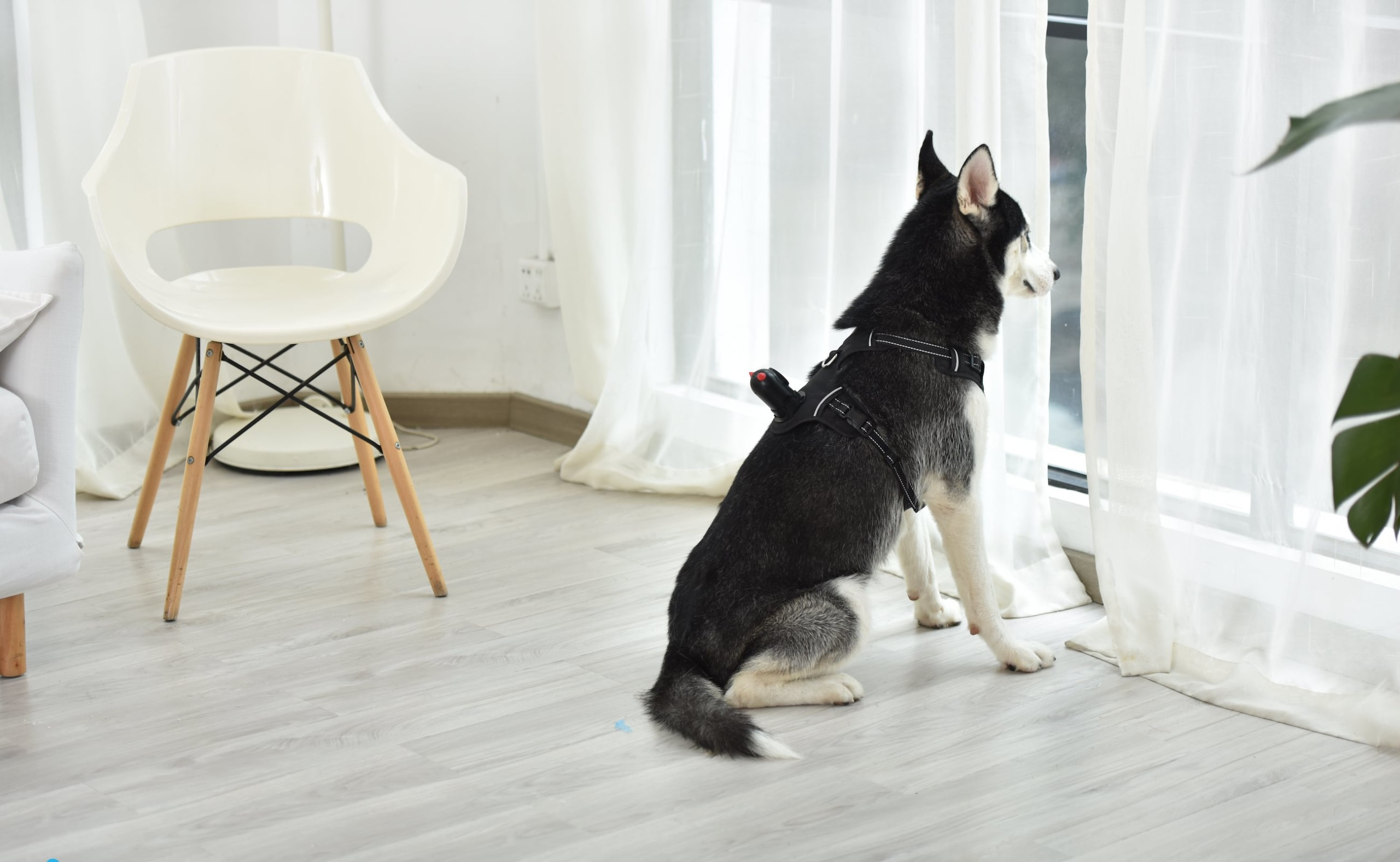 PetNow Wearable HD Dog Camera gives a new perspective to your adventures