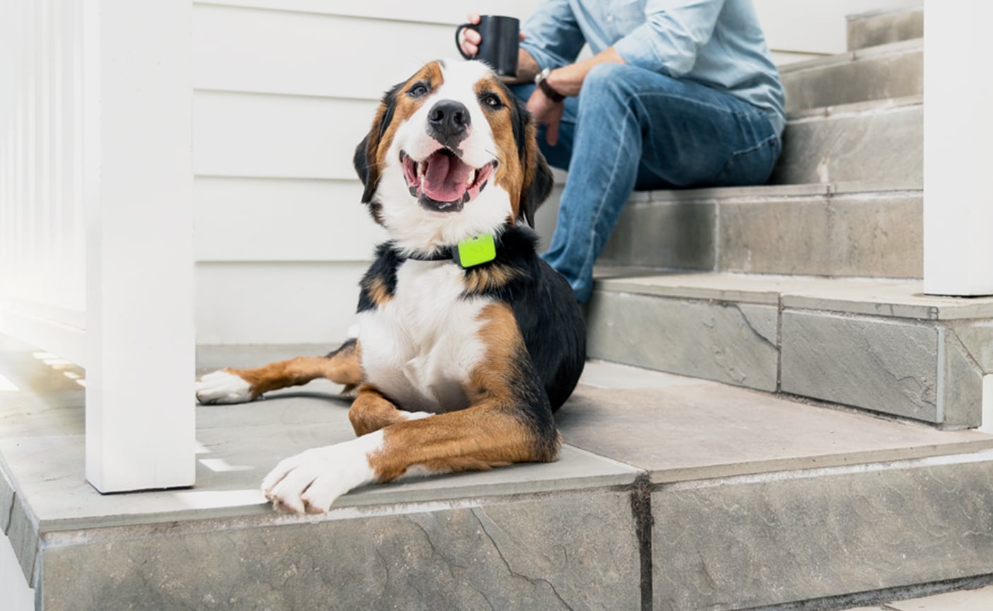 Whistle Go Explore Pet Location Tracker keeps an eye on your pet's health and well-being