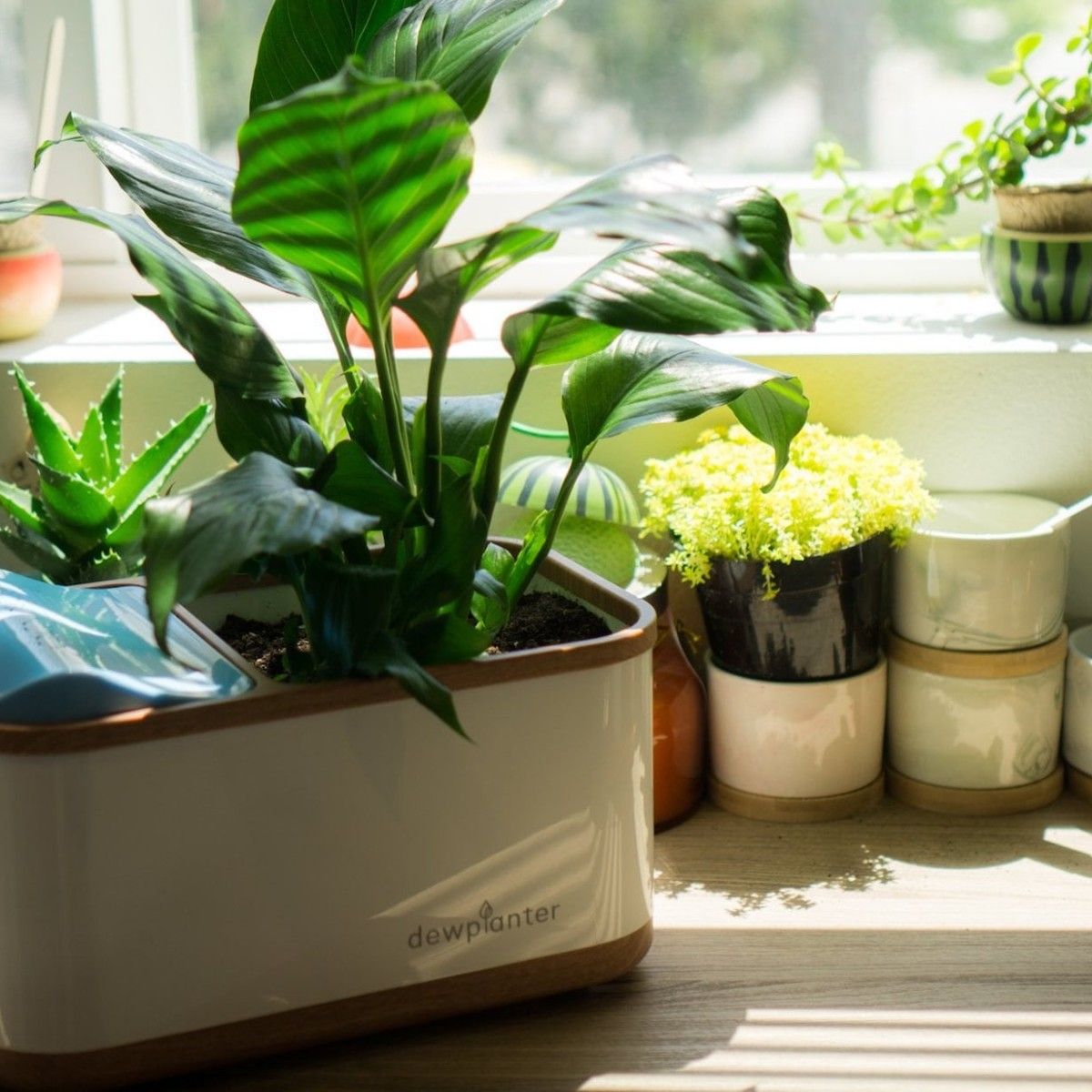 Dewplanter Water-Generating Planter uses condensation to hydrate your plants