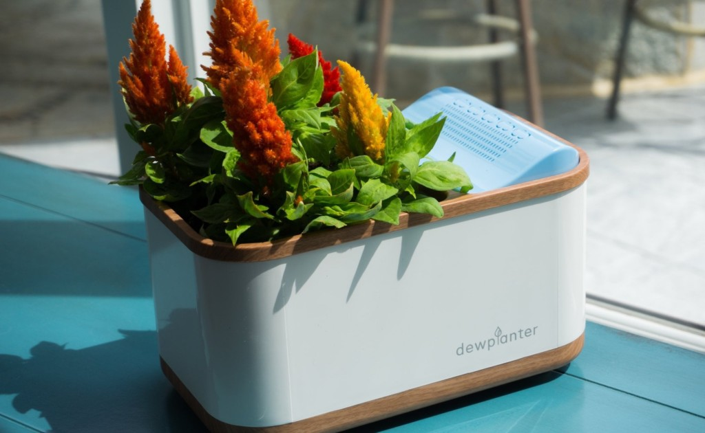 Dewplanter+Water-Generating+Planter+uses+condensation+to+hydrate+your+plants