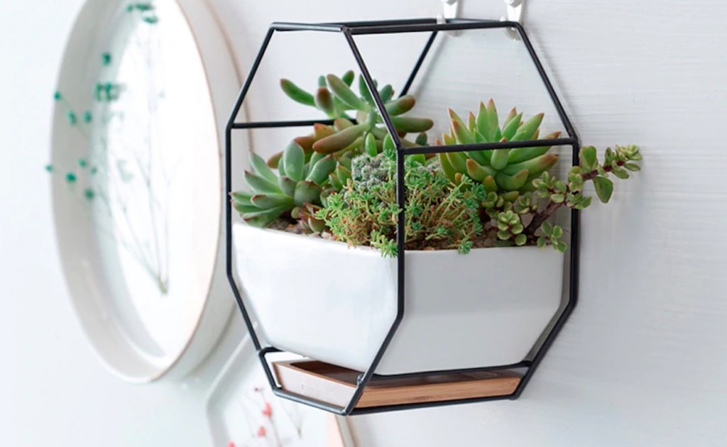 Iron+%26%23038%3B+Ceramic+Geometric+Hanging+Planter+is+the+perfect+place+for+succulents