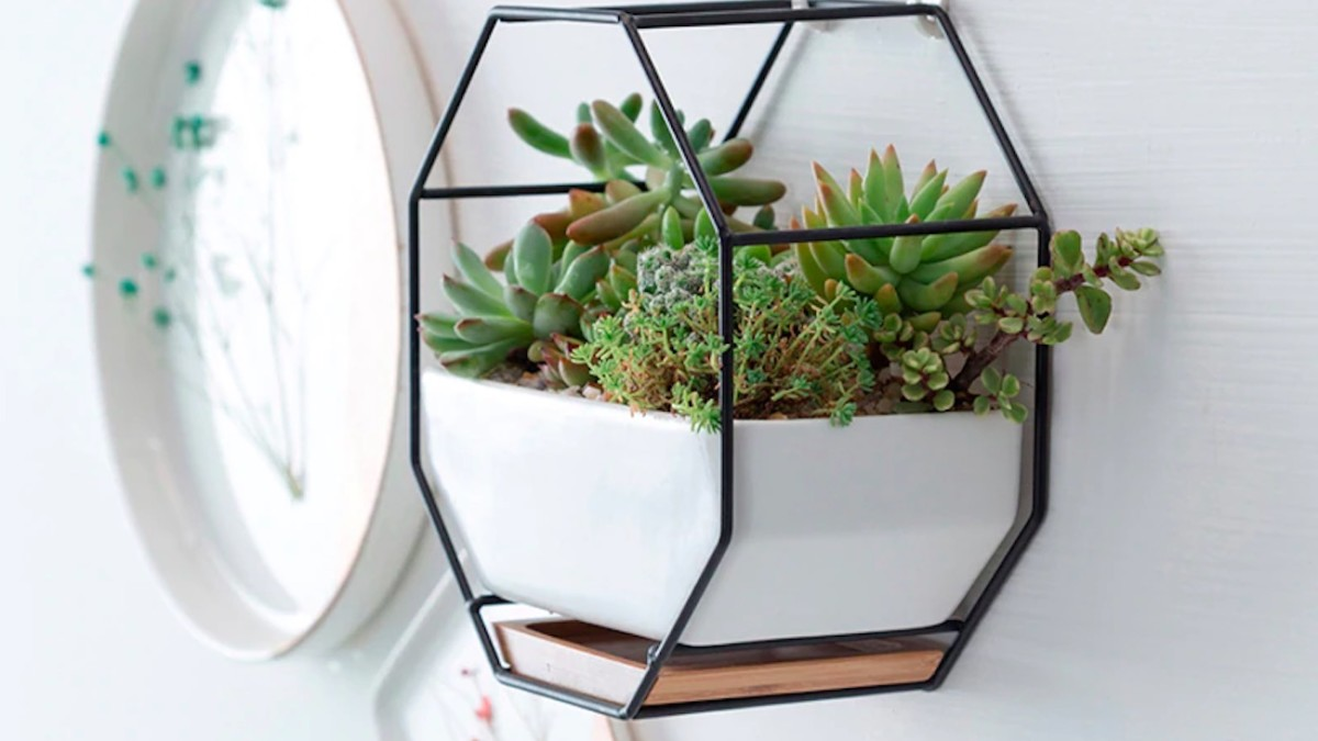 Iron & Ceramic Geometric Hanging Planter is the perfect place for succulents