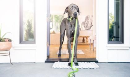 Whistle Go Explore Pet Location Tracker