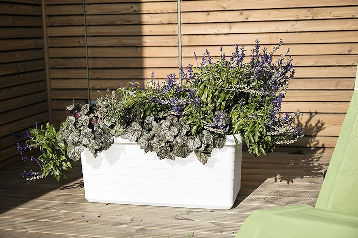 Plastia Berberis Large Self-Watering Planter helps you grow even big and tall plants easily