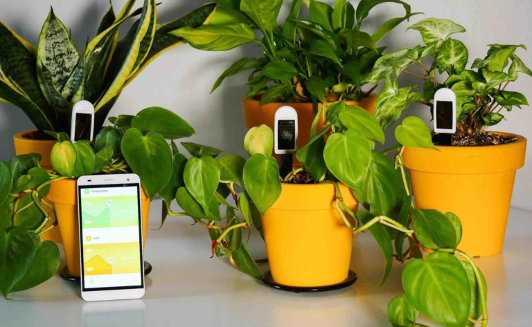 greensens Smart Houseplant Sensors track three parameters