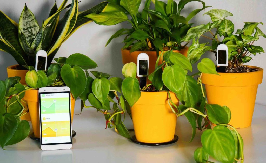 greensens measures and records soil moisture, ambient temperature, and light conditions