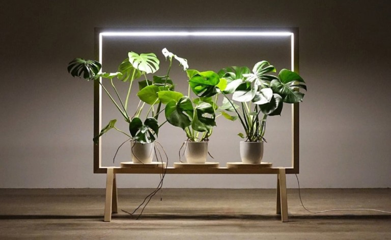 GreenFrame divides rooms with lights and plants