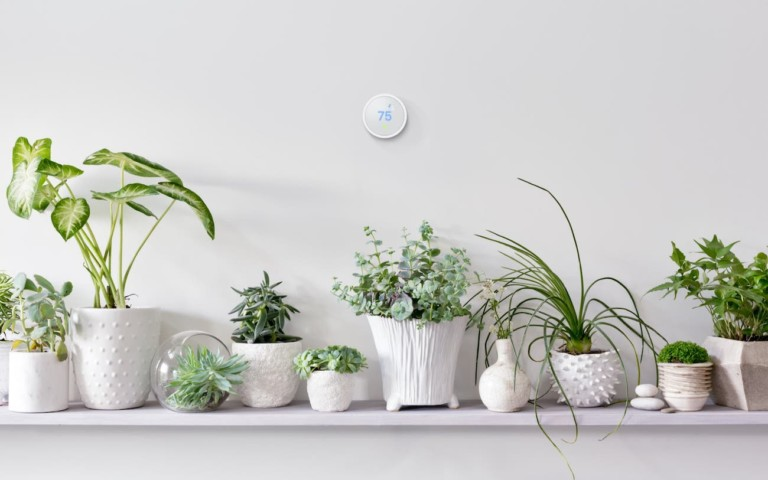 A round smart home thermostat on a wall with plants below it.