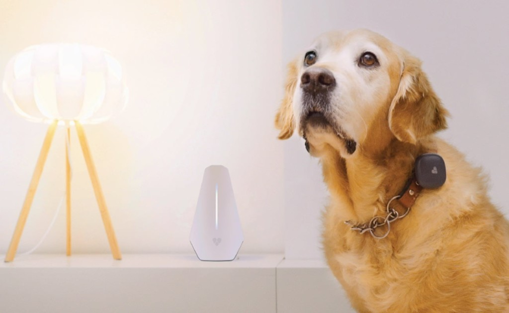 A yellow Lab is standing next to a light and white Basestation, wearing a collar.