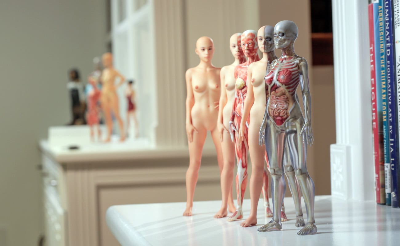 Full Color 3D Human Anatomy Models show the human body in exceptional detail