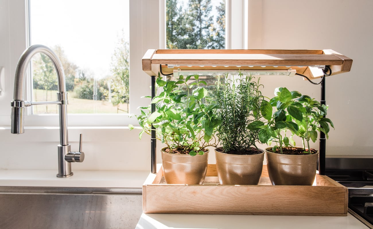 Steady State Upcycled Plant Food and Sustainable Grow Kits have everything you need