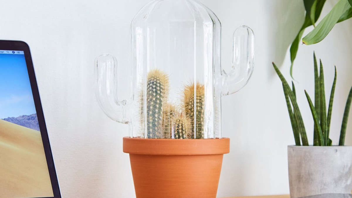 Cactus-Shaped Terrarium creates an ideal growing environment for your succulents