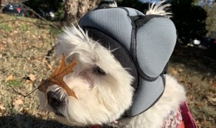 PAWNIX Noise-Cancelling Headset for Dogs