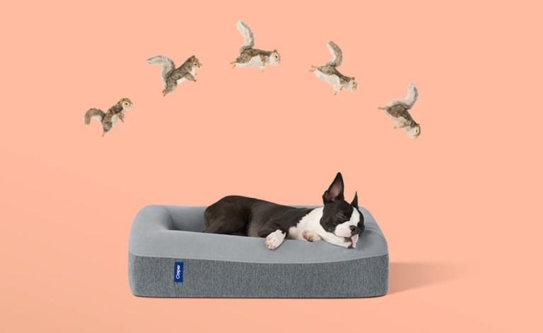 Casper Dog Bed Memory Foam Pet Mattress