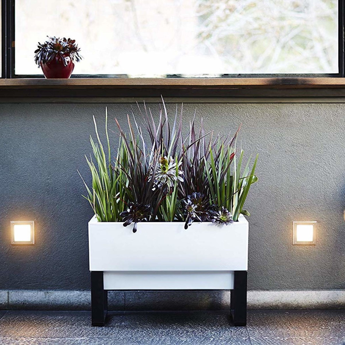 The best smart plants to improve your daily life