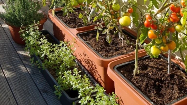 Plastia Berberis Large Self-Watering Planter