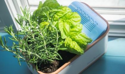 Dewplanter Water-Generating Planter