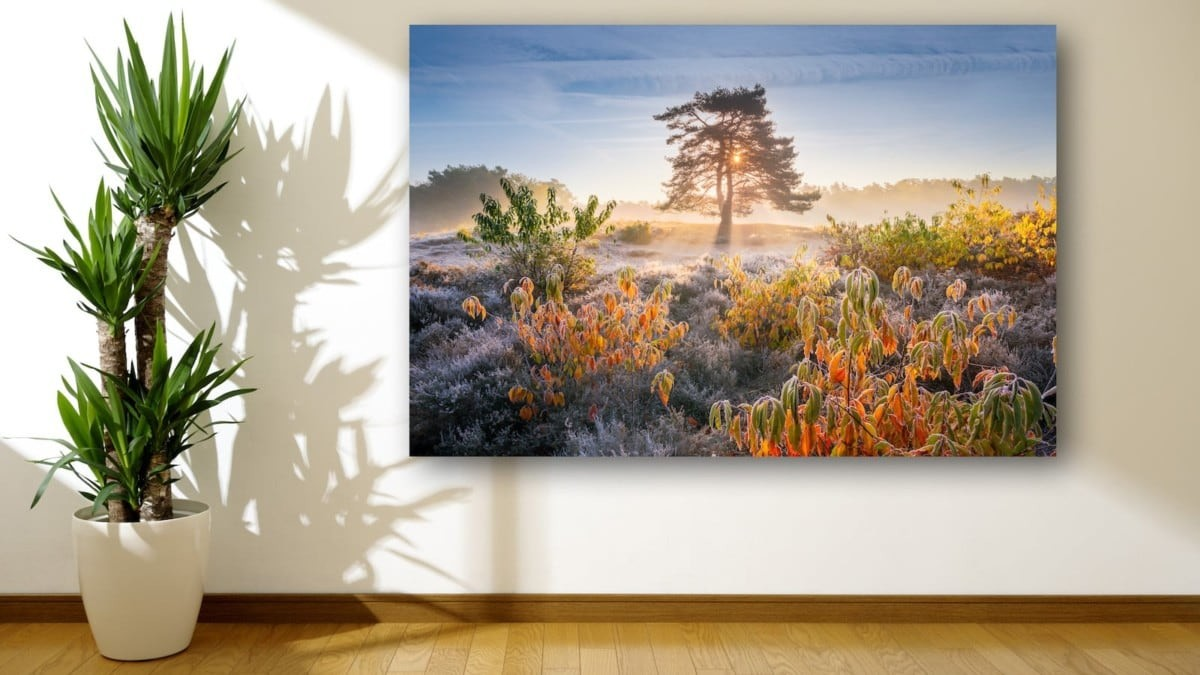A satin finish offers the best picture exhibit