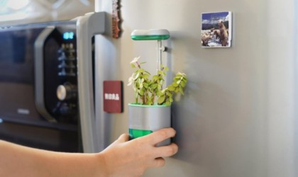 PICO Self-Watering Palm-Sized Garden