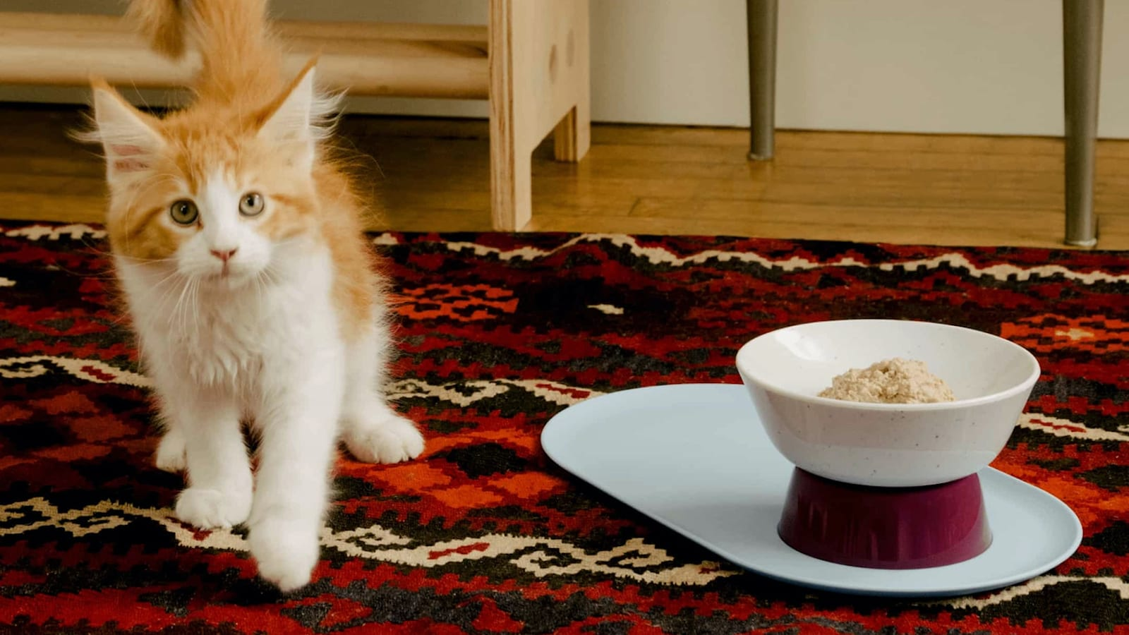 Cat Person Mesa Bowl No-Tip Food Dish is designed specifically for feline faces