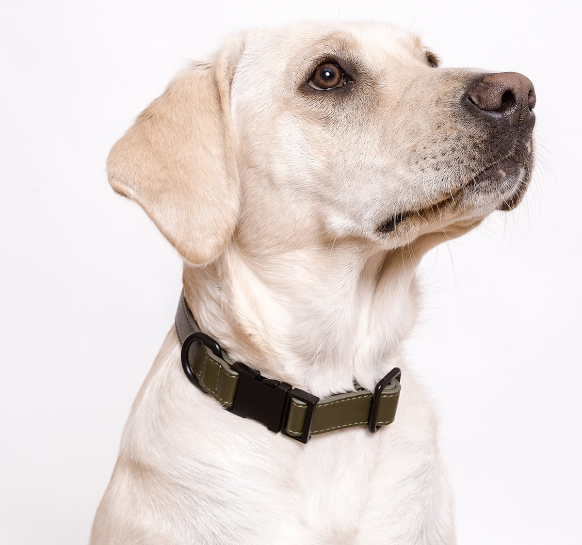 scruff + bone Modern Dog Collar has a simple, minimal design