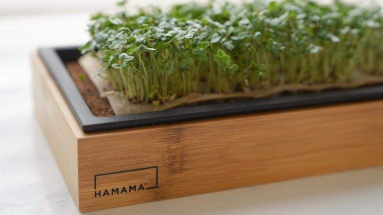 Hamama Microgreens Kit is your fail-proof indoor victory garden