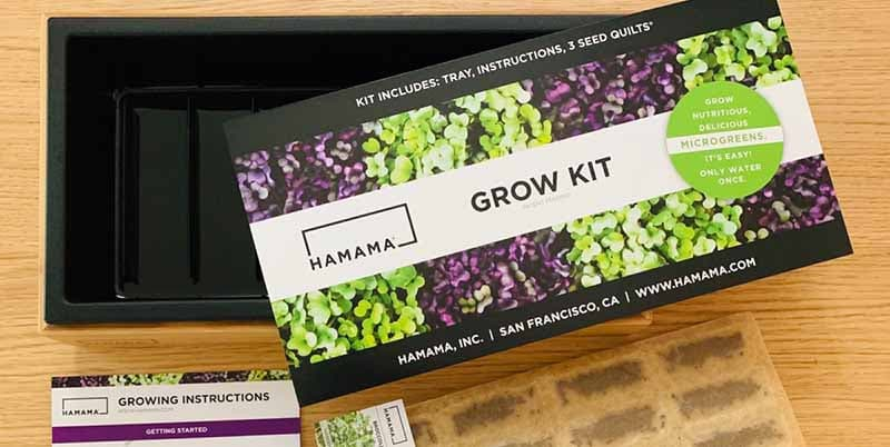 Hamama Healthy Microgreens Kit