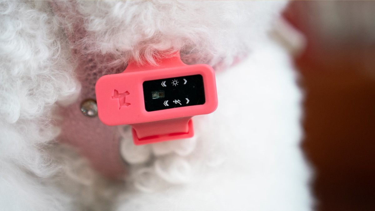 PuppyDoc IoT Dog Health Monitor helps you keep an eye on your pup's overall health