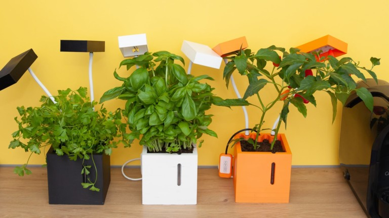 QBUX urban farming gadget grows in completely dark places