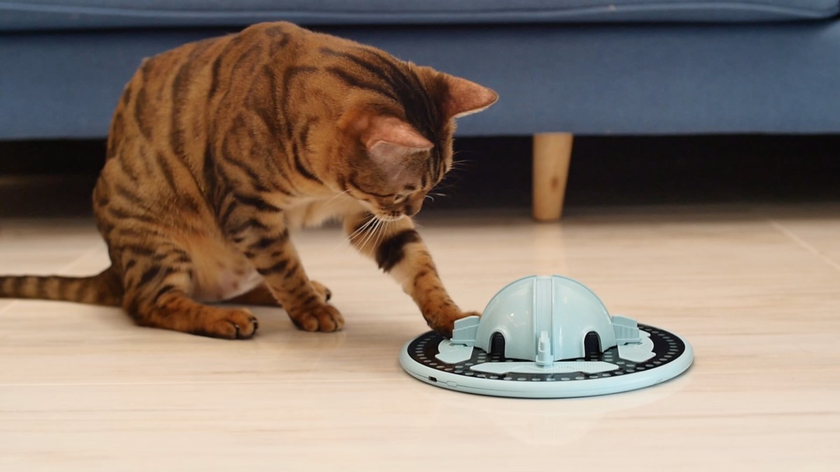 TrickyPaw cat hunting toy is a smart companion to entertain your feline friend