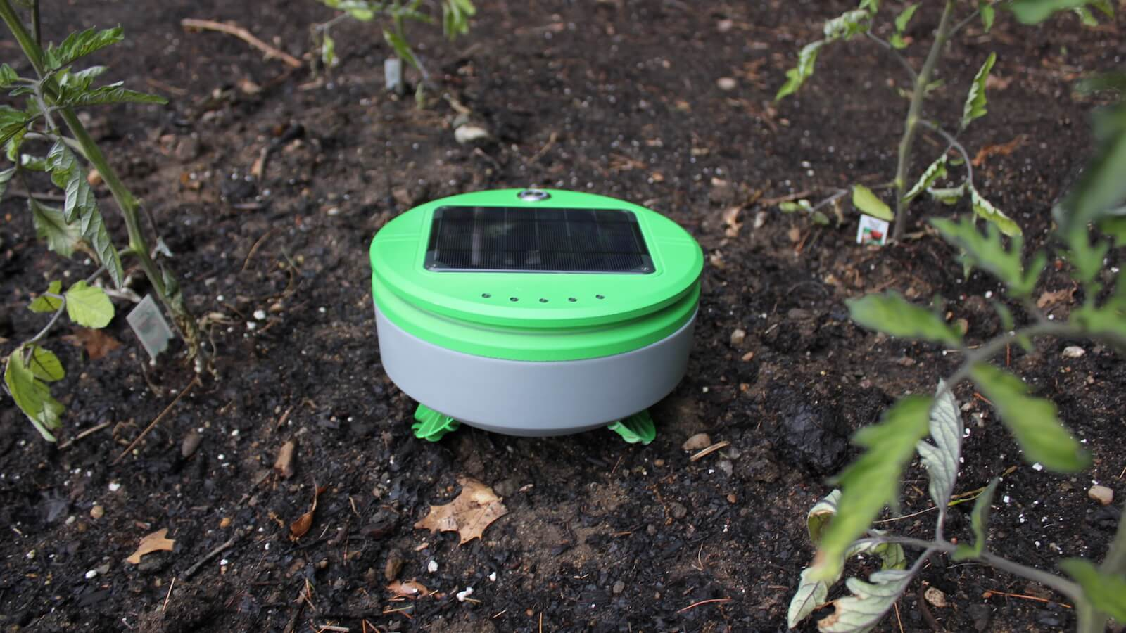 Tertill Weeding Robot is the perfect garden gadget for whacking weeds
