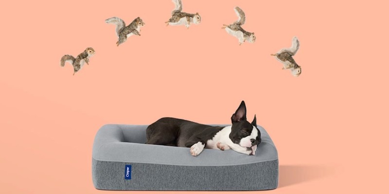 Casper Dog Bed Memory Foam Pet Mattress