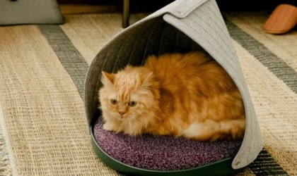 Cat Person Canopy 3-in-1 Feline Bed