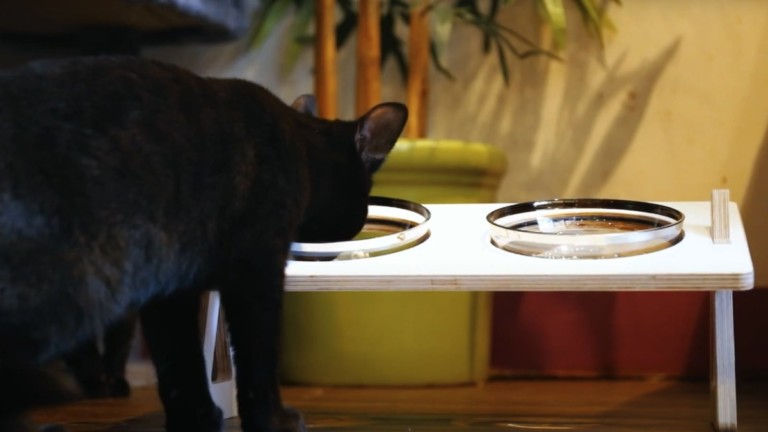 Kitty Bowl elevated pet food stand