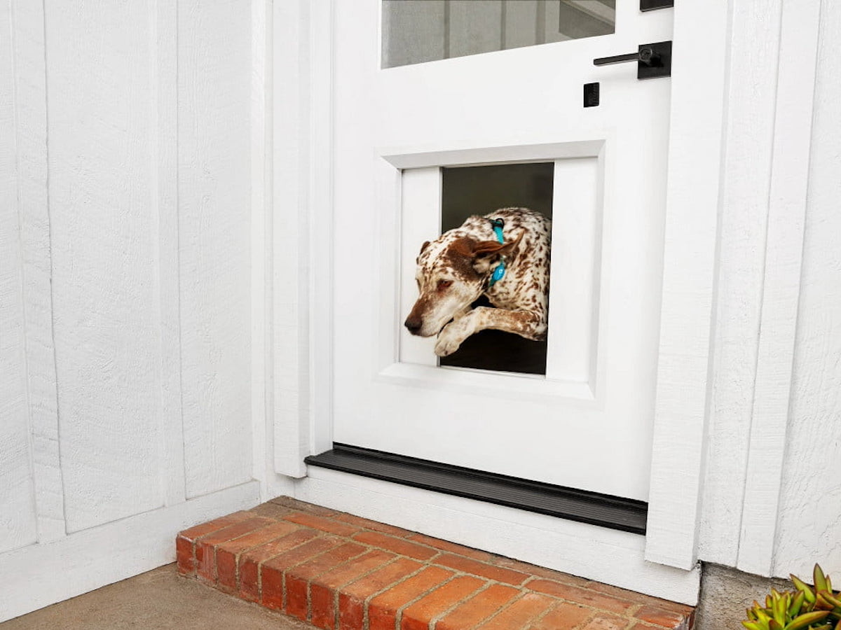 myQ Pet Portal smart dog door lets your pup go outside whenever you want