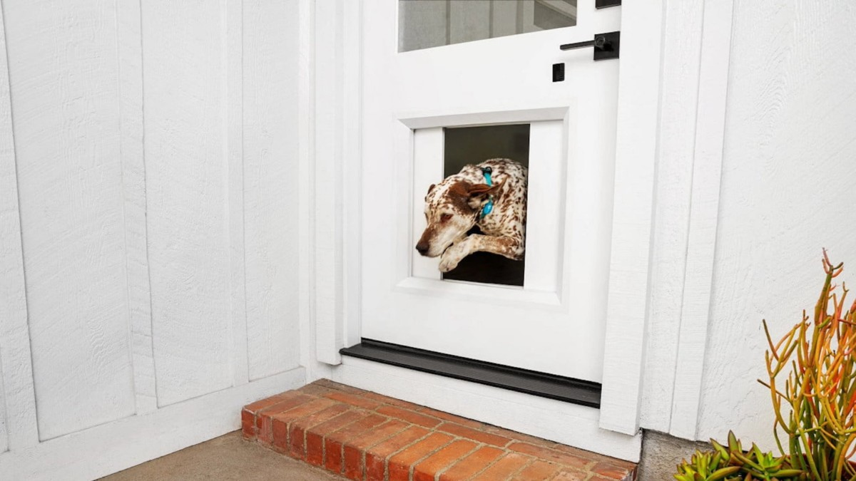 This $3K smart dog door will let your pets step out when they wish to