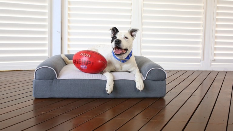 This dog bed helps improve your older dog's quality of life