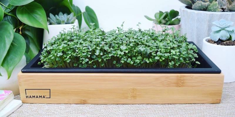 smart garden kits
