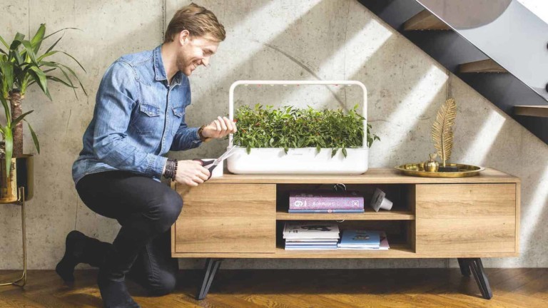 Why you should buy a smart garden for your kitchen this spring