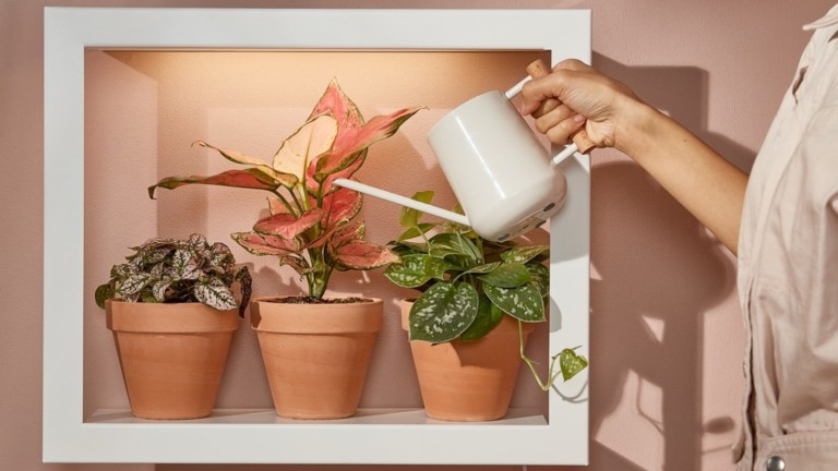 Modern Sprout Smart Standard Plant Growframe keeps flowers happy and healthy indoors