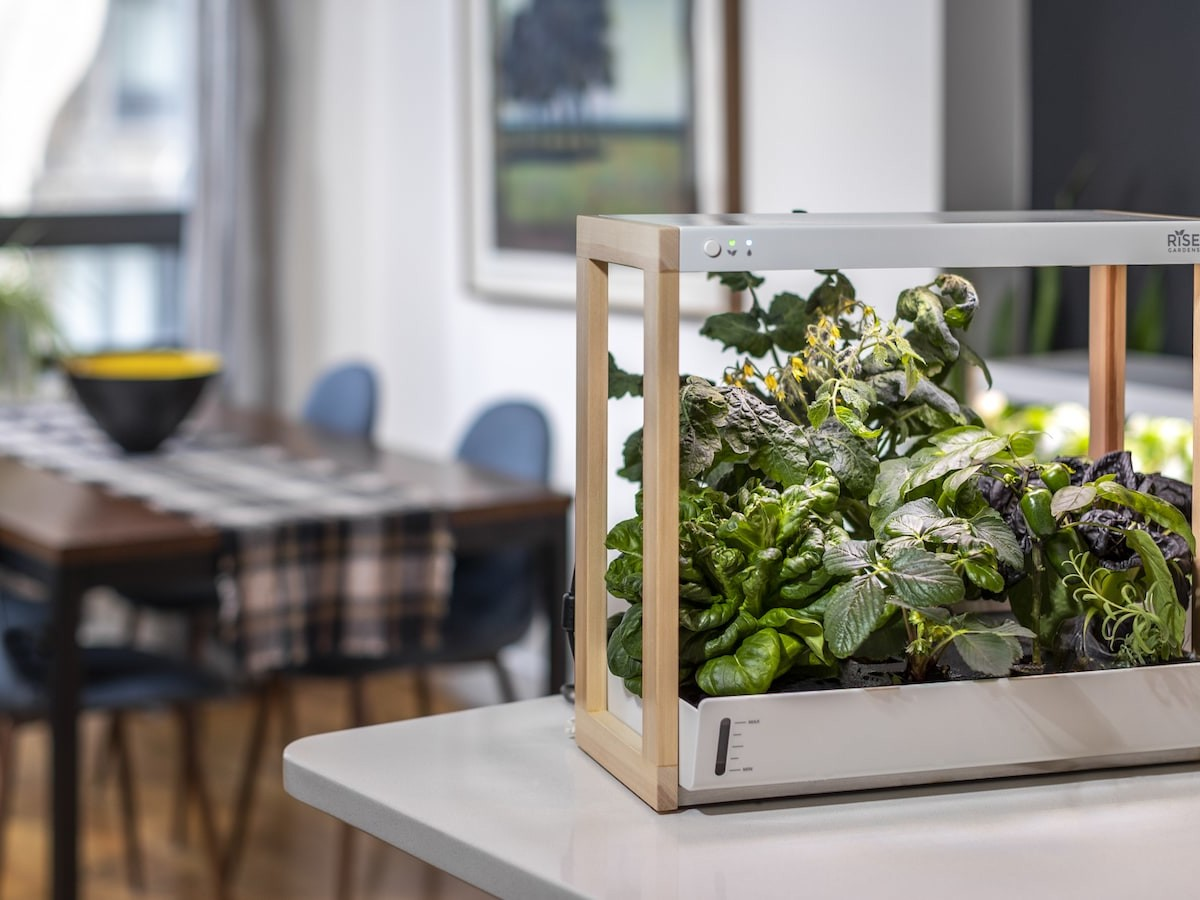 Personal Rise Smart Garden lets you grow herbs, veggies, and leafy greens