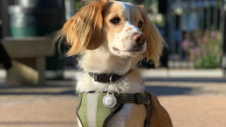 Nomad Rugged Pet Tag for AirTag has an IP67 waterproof housing and a TPU overmold