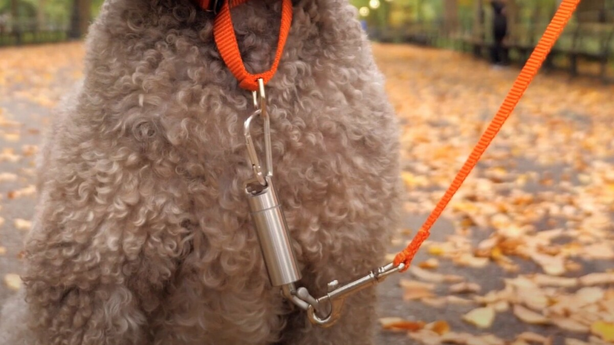 This non-punitive dog training device teaches your pup how to walk properly beside you