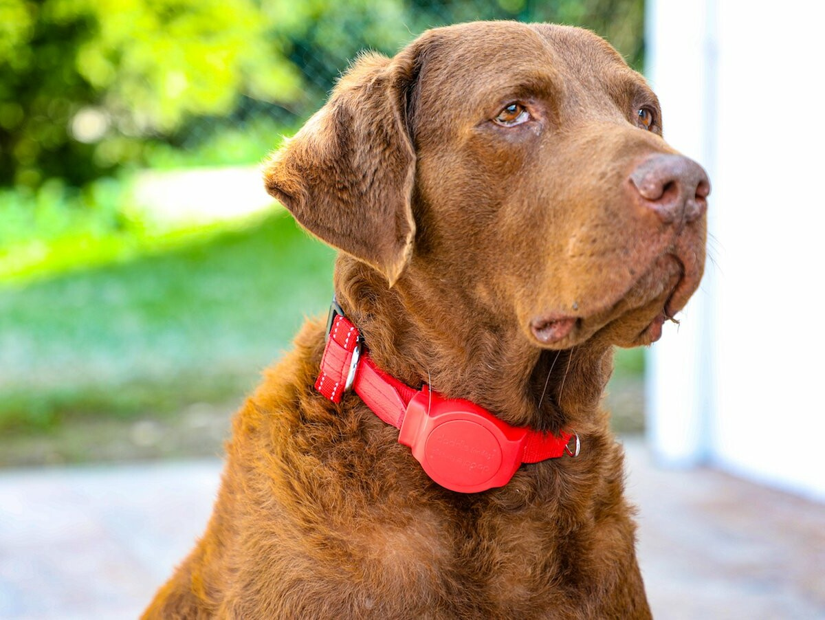 Doddle built-in dog leash stays on your pet and allows you to save them in an emergency