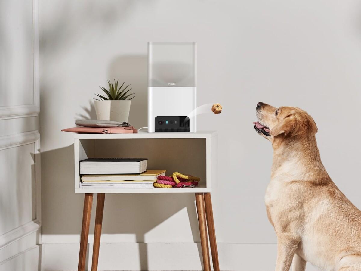 Petcube Bites 2 Lite smart HD pet camera has a treat dispenser, 160° view, and 2-way talk