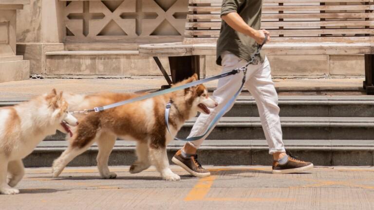 HUNDUR Leash hands-free multi-dog leash absorbs shocks and avoids annoying tangles