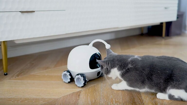 Rocki robot companion for pets lets you play and interact with your furry friend, remotely